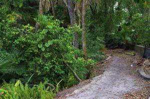 Unpaved pathway in Dickson Azalea Park