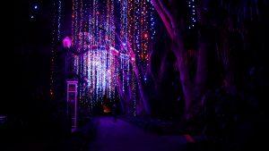 Dazzling Nights at Leu Gardens